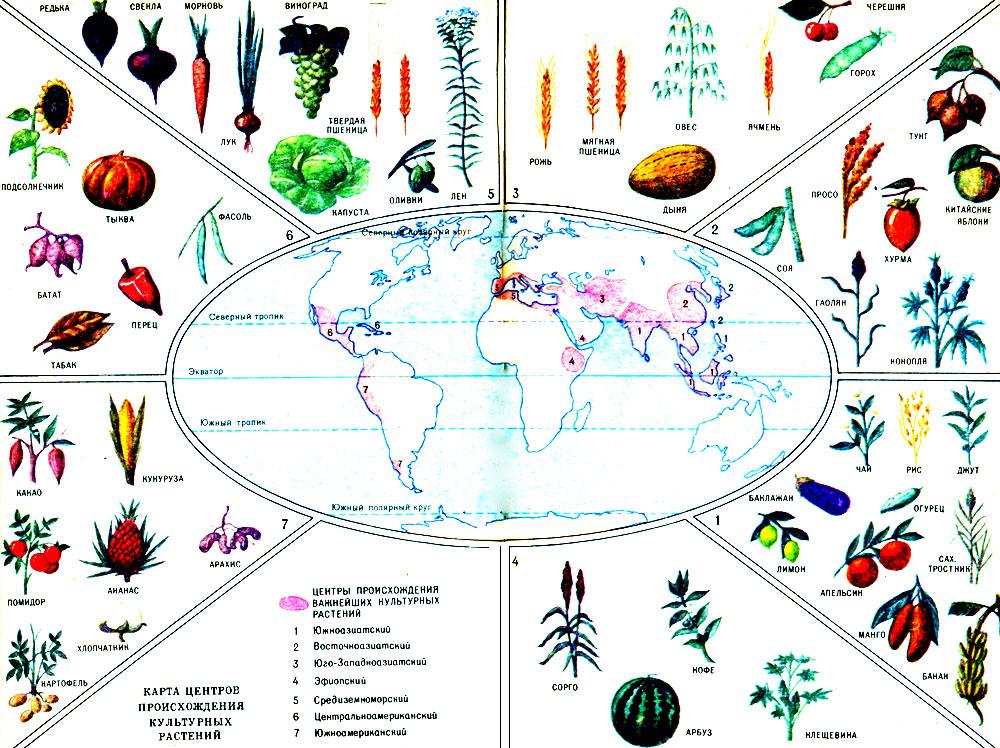 Чем культурное растение отличается от