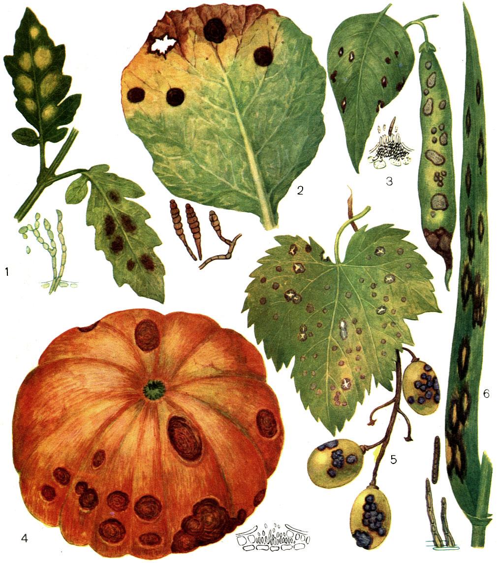 растения паразитов в организме