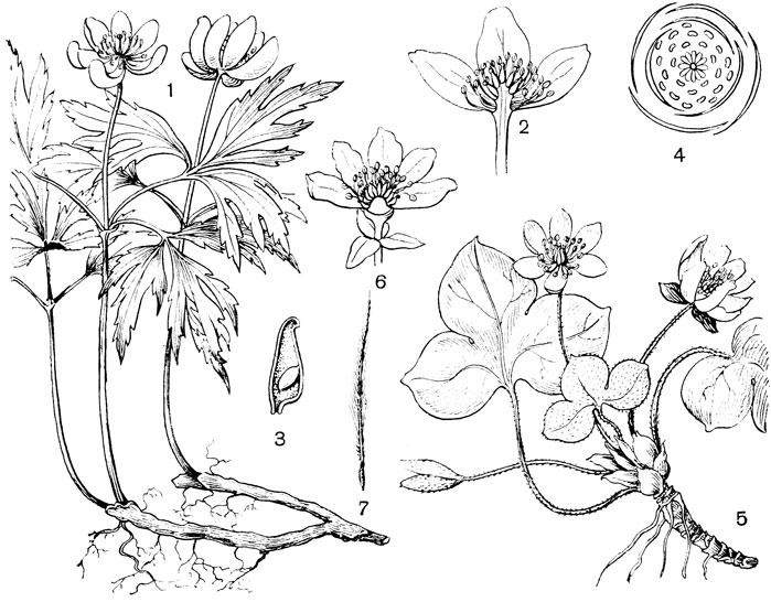 4 - диаграмма цветка.