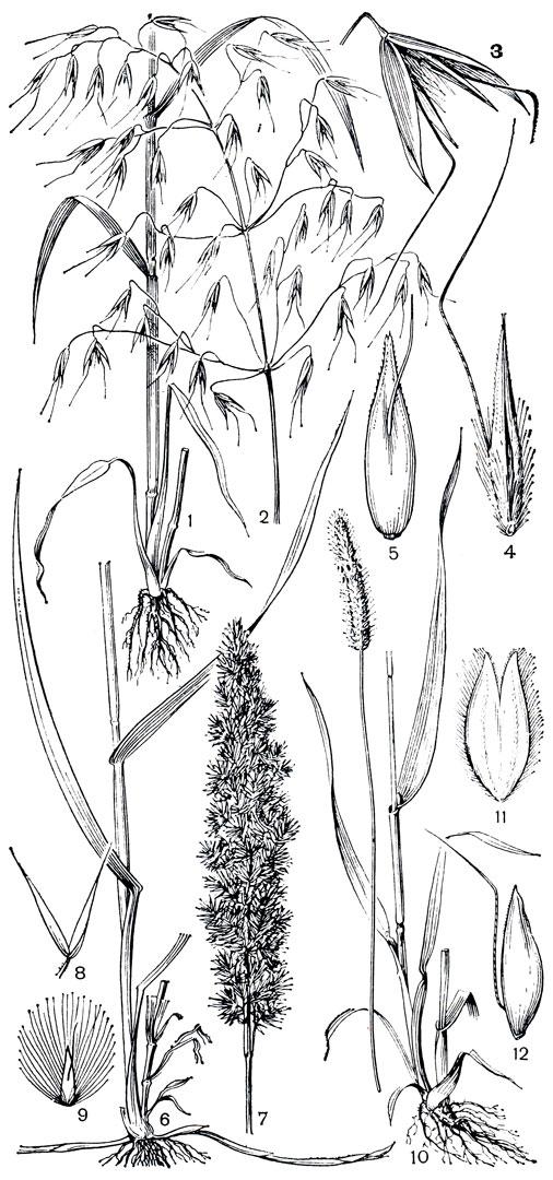 1 - нижняя часть растения;