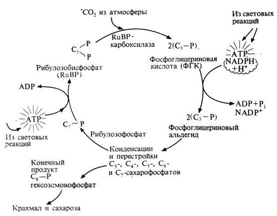 Упрощенная схема цикла