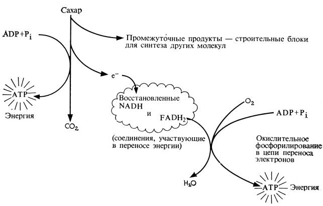 Схема, поясняющая функции