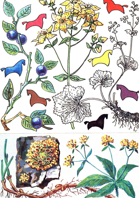 Удивительные растения рядом