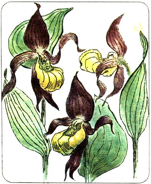 Орхидные  1981 Бутейко А.И. - Сигнал тревоги - цветок лилии  8bd4c682be3dc